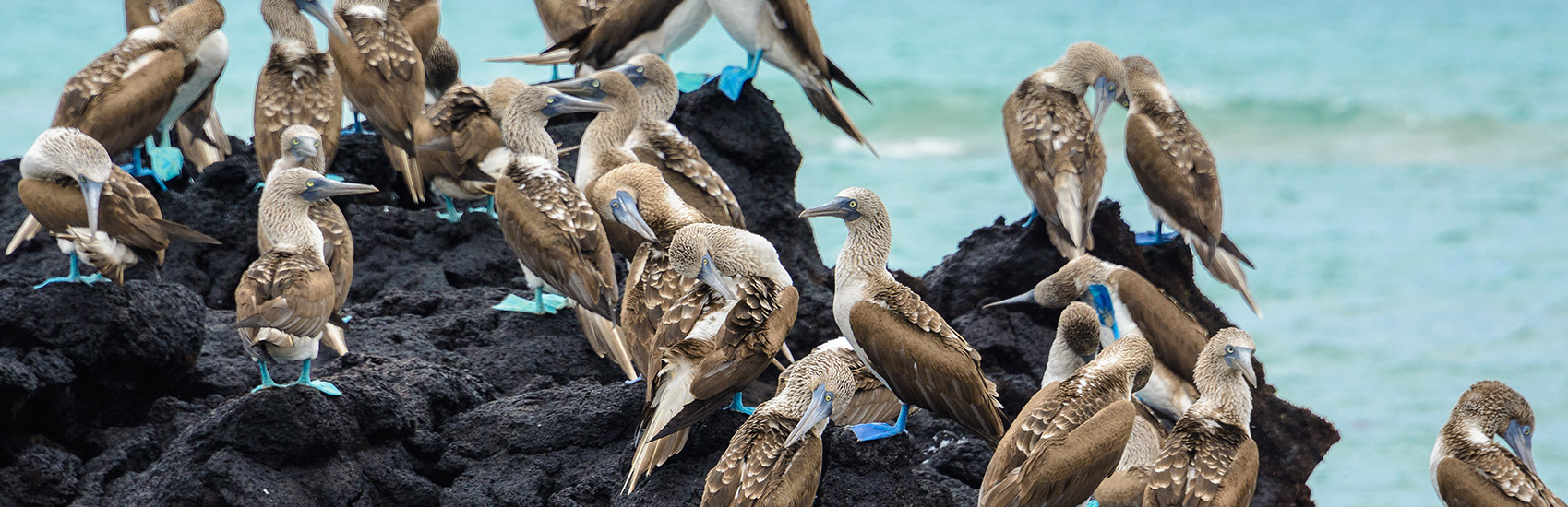 When to explore the Galapagos Islands 3
