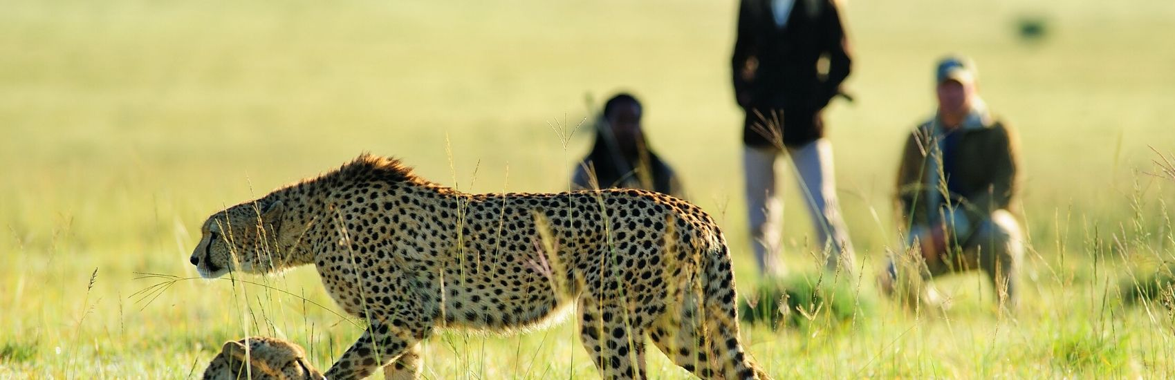 Majestic South Africa with African Travel 2