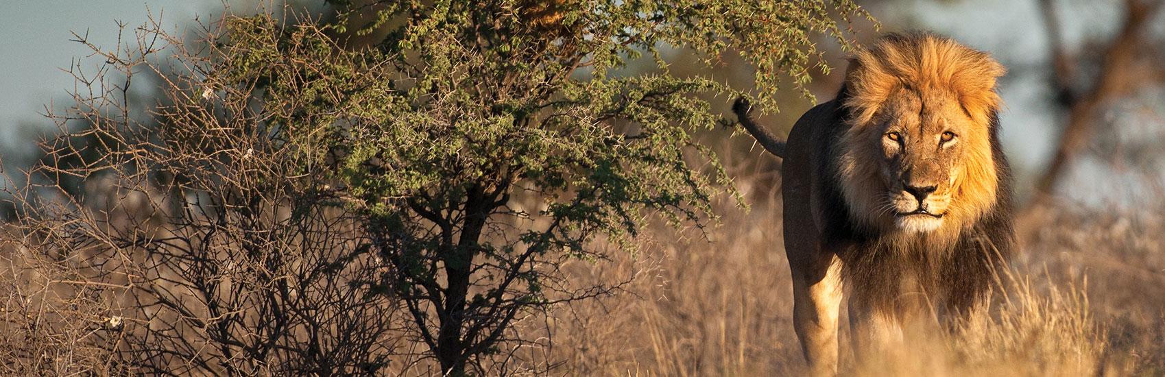 Luxury Escorted South African Safari 4
