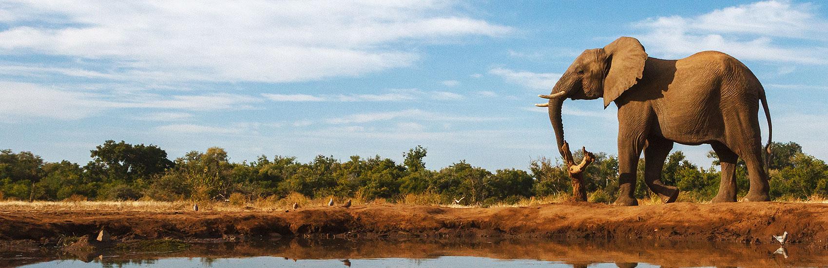 Luxury Escorted South African Safari 3