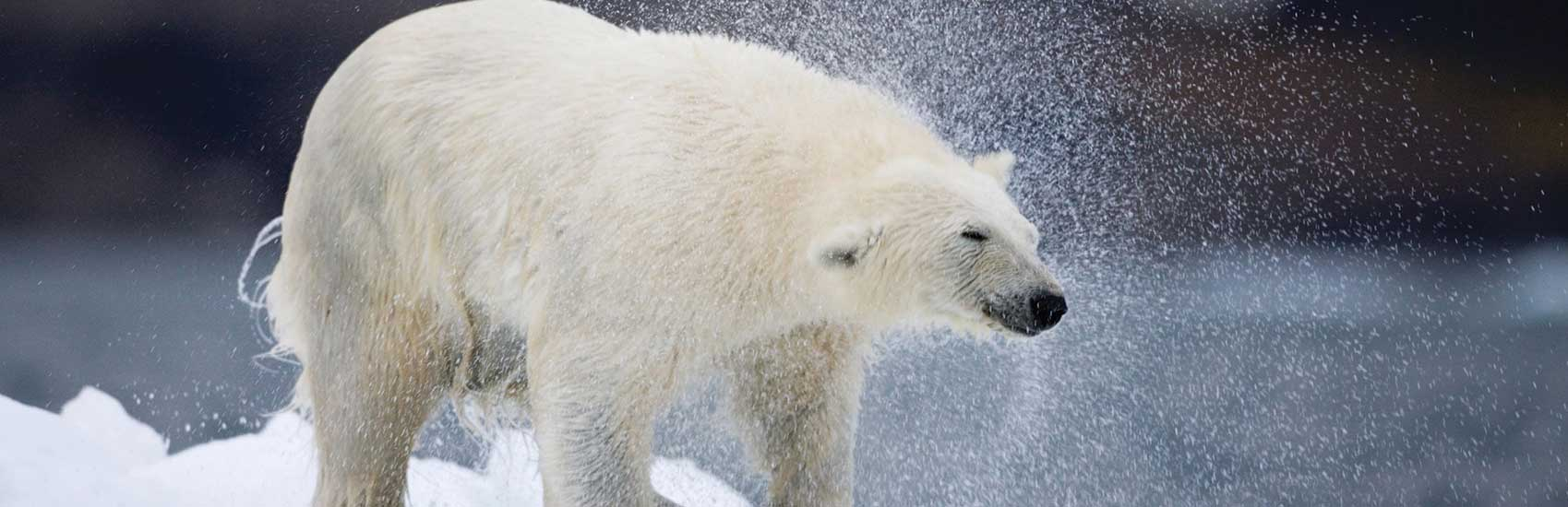 Early Bonus Savings to the Arctic with Seabourn 1