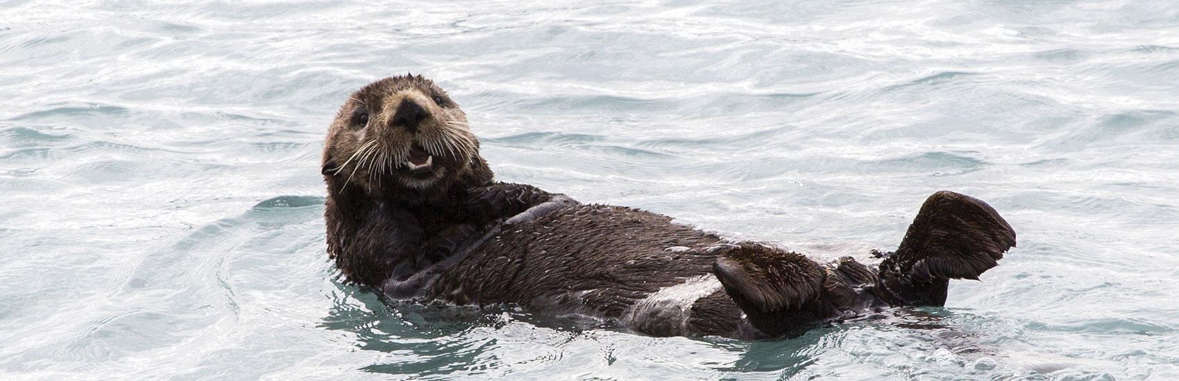 Holland America: Alaska's Top 5 Marine Mammals 2