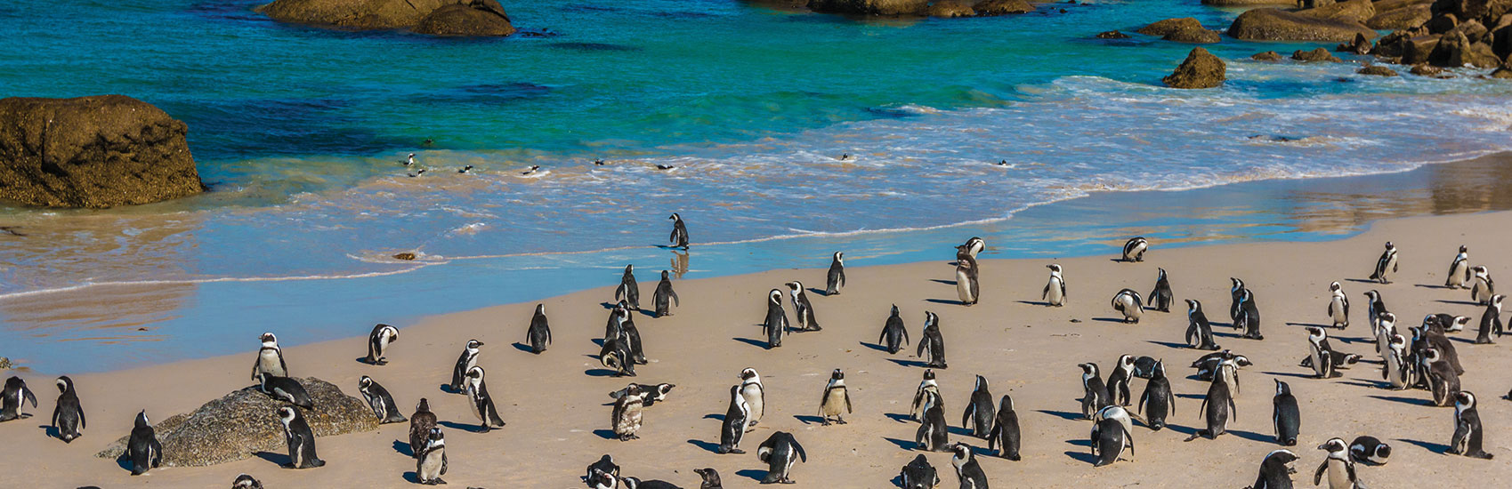 Luxury Escorted South African Safari 1