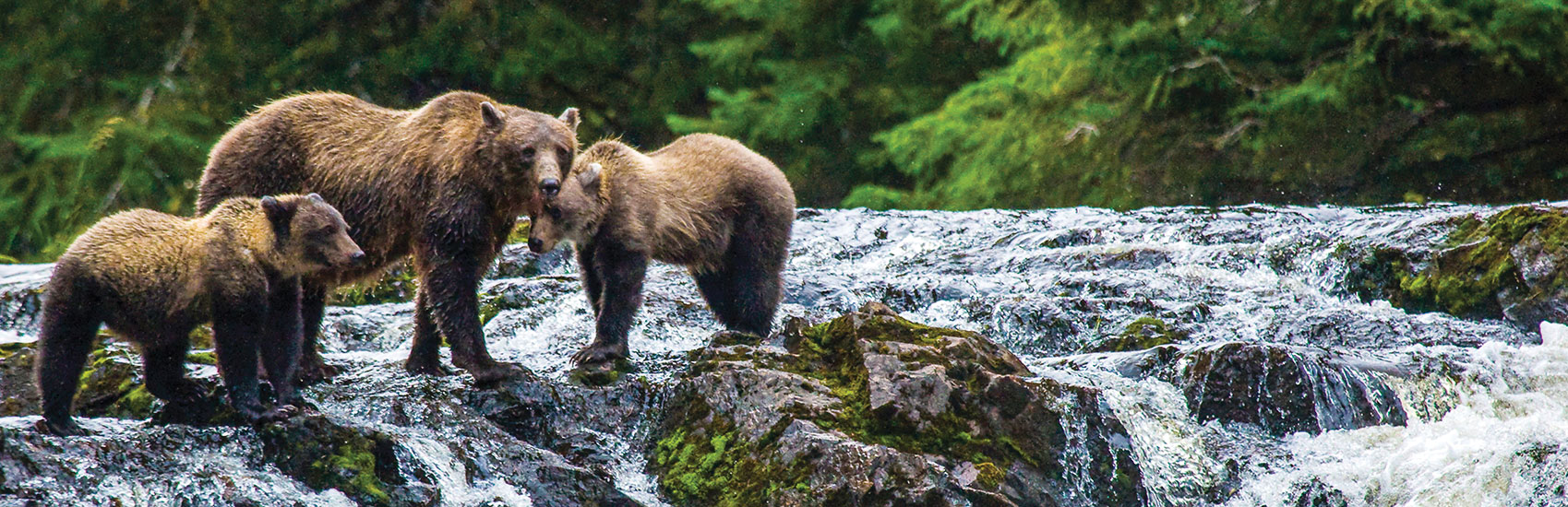 Authentic Alaska with Lindblad Expeditions